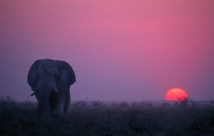 <b>Sunsets and Animals</b><br>Selection of 6 items